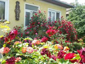Къща за гости Стефани