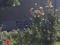 Вила Роза