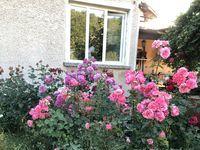 Вила под наем Rose Garden